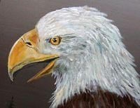 Eagle Head Profile